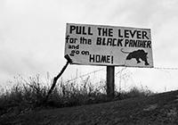 blackpanthersmall